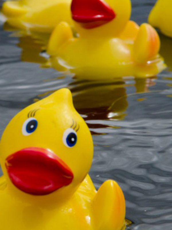 Events Duck Race WEB